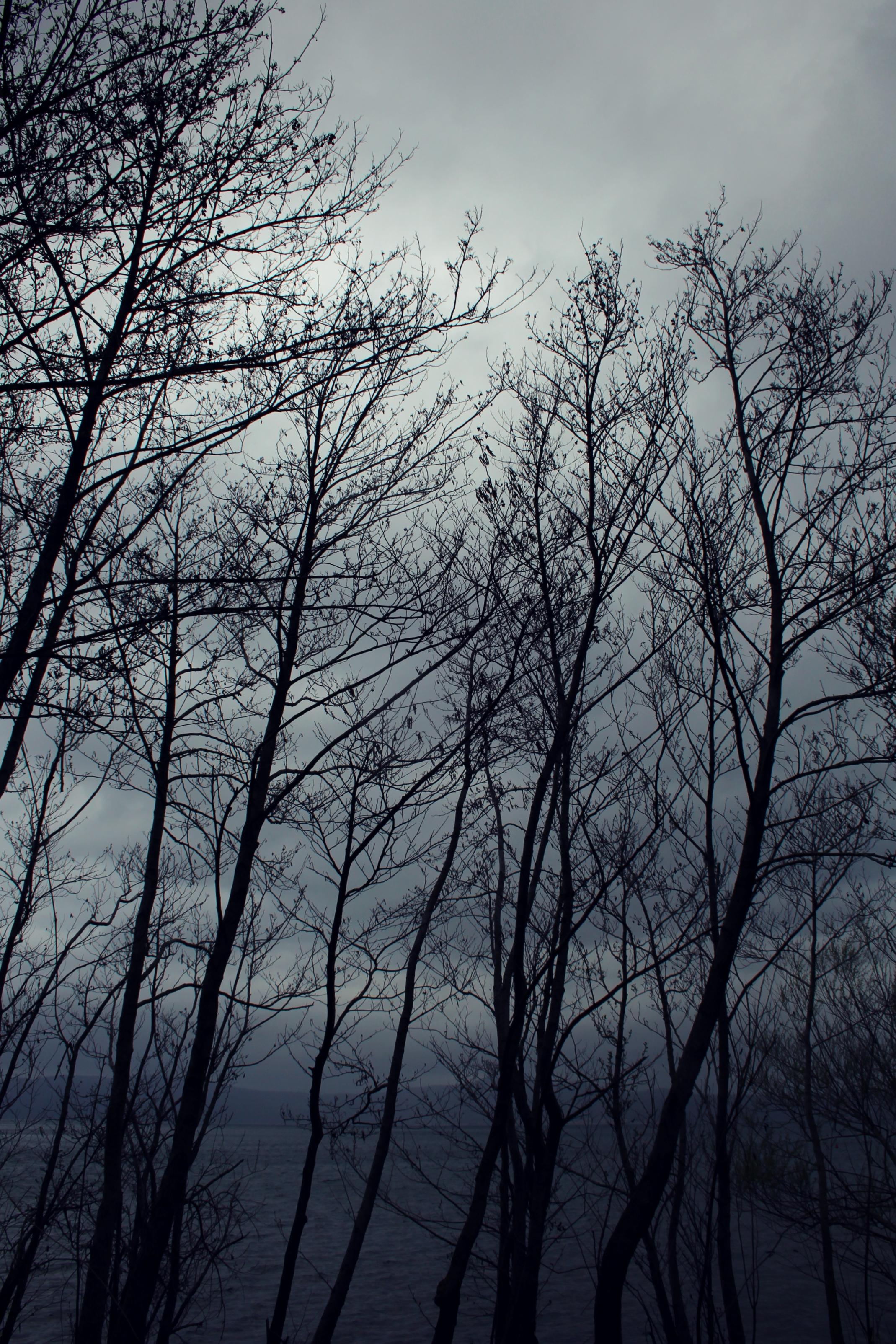 la solitudine degli alberi in riva al lago