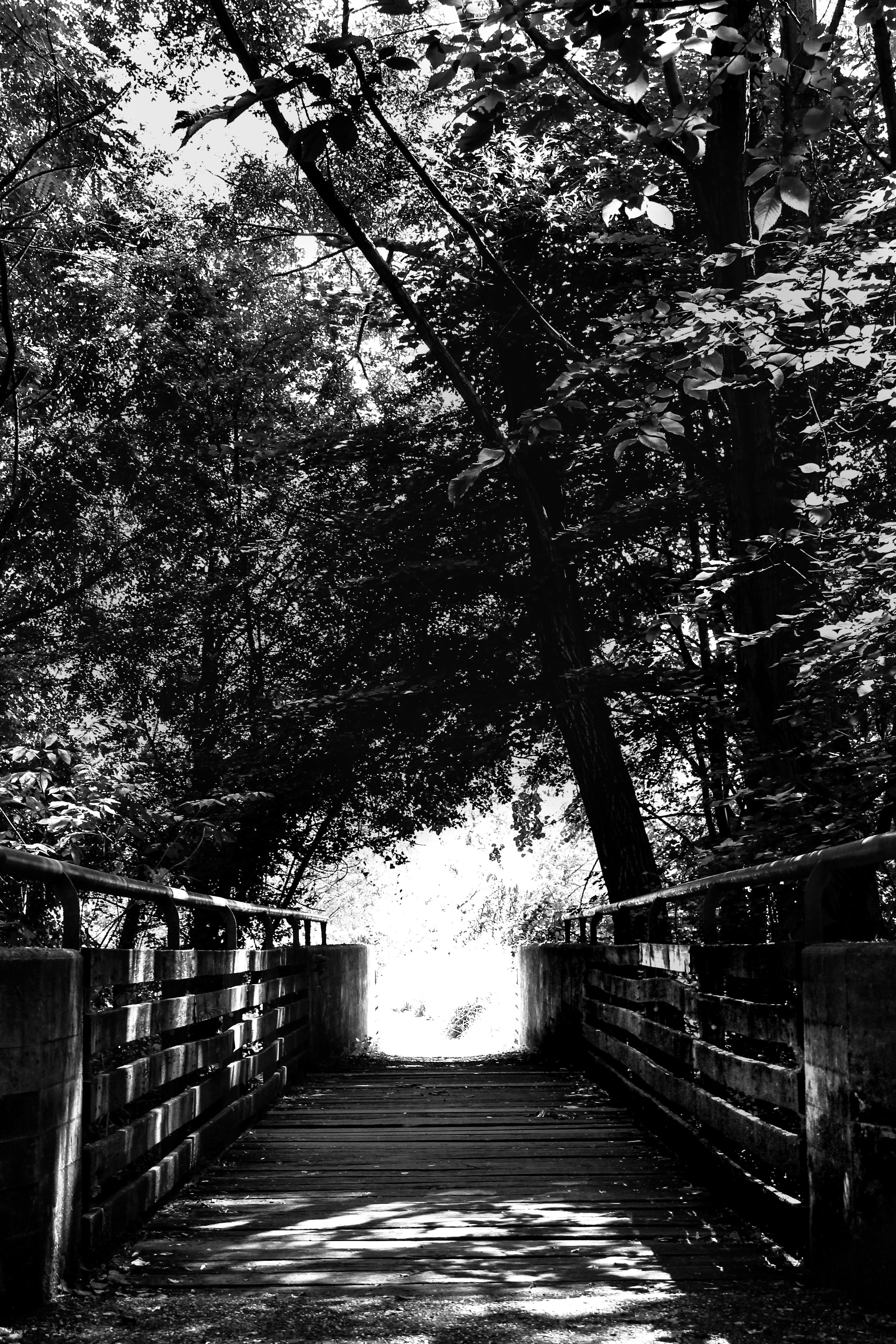 ponte nel bosco con gli alberi in una giornata di sole