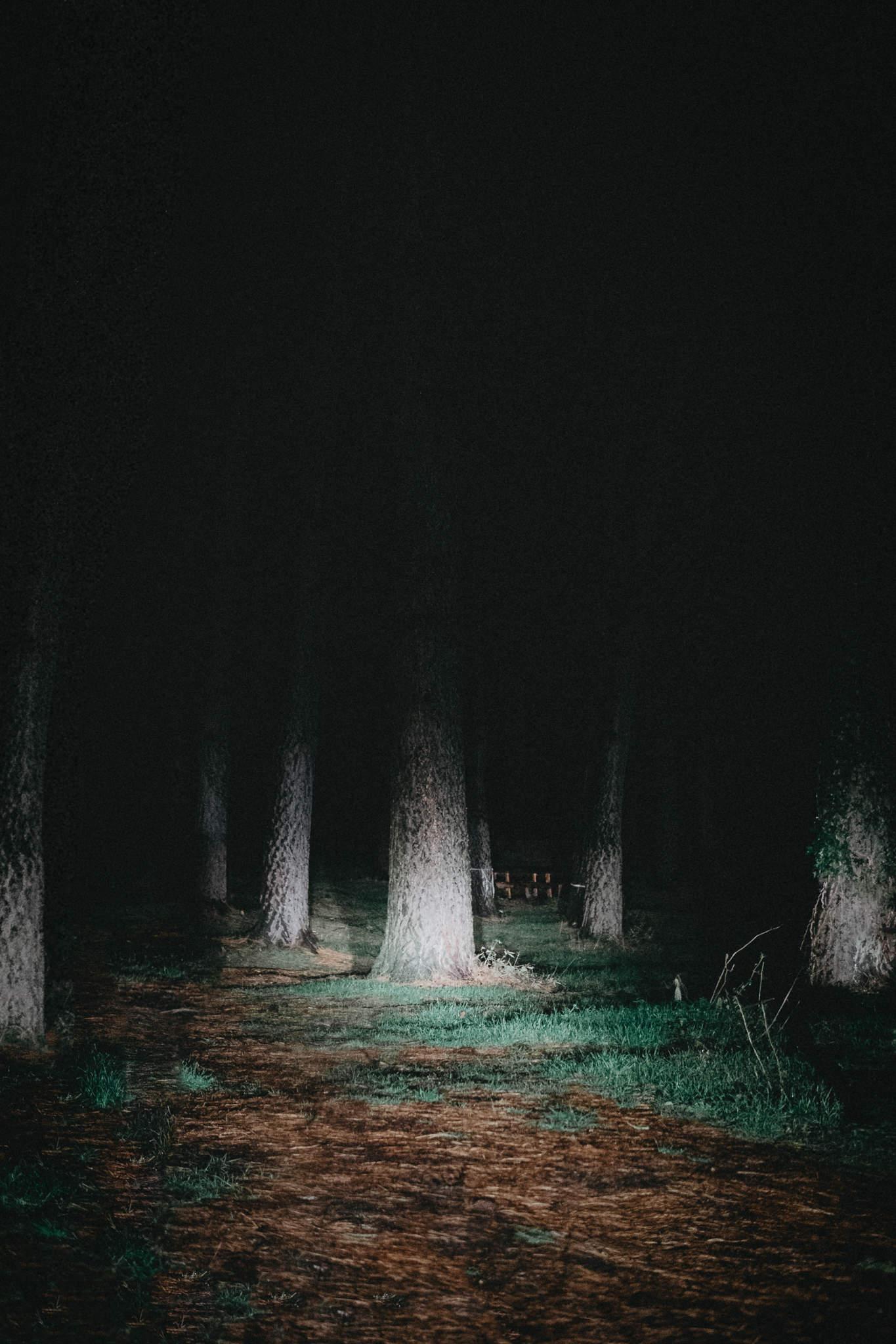 nel bosco di notte da soli senza luce come un incubo